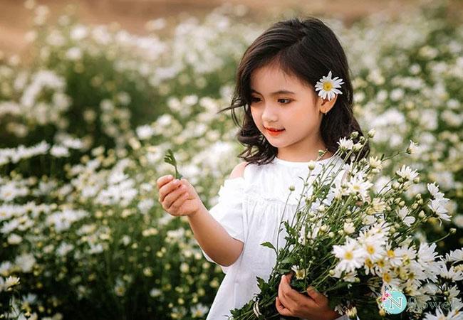 hình ảnh hoa cúc họa mi 2