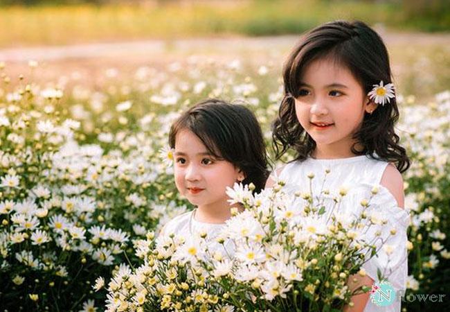 hình ảnh hoa cúc họa mi 3