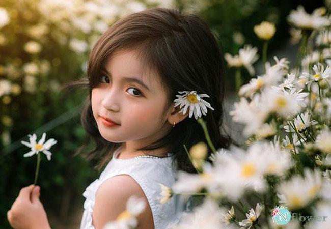 hình ảnh hoa cúc họa mi 4