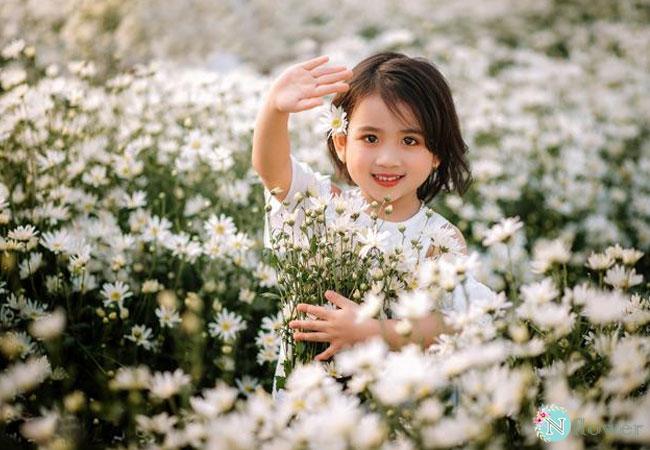 hình ảnh hoa cúc họa mi 5