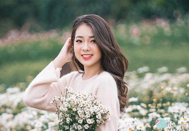 hình ảnh hoa cúc họa mi 6