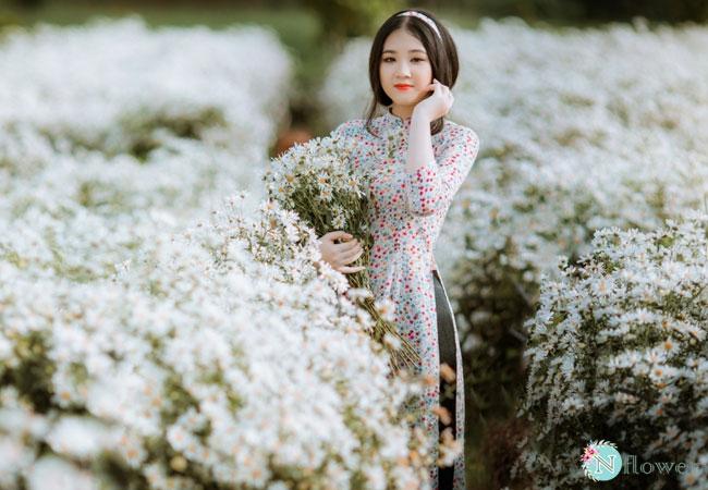 hình ảnh hoa cúc họa mi 7