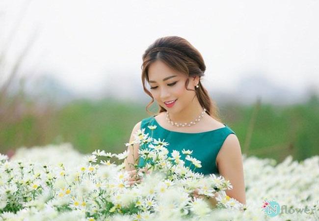 hình ảnh hoa cúc họa mi 8
