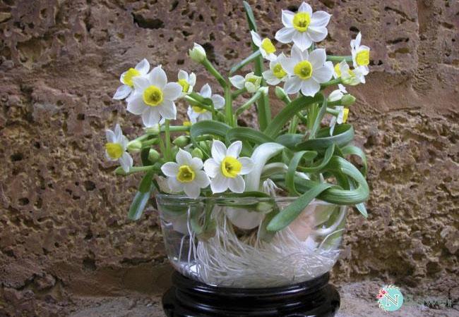 hình ảnh hoa thủy tiên 1