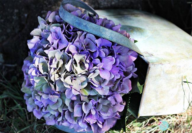 hoa cẩm tú cầu tím 1