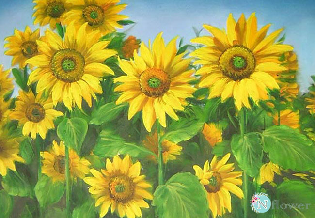 tranh vẽ hoa hướng dương 6