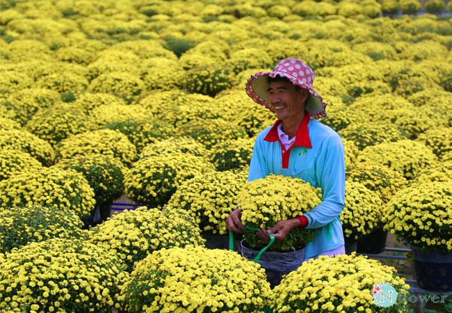 cách chăm sóc hoa 3