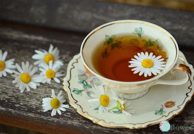 trà hoa cúc 1
