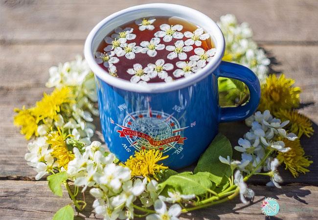 trà hoa cúc 7