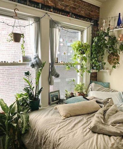 cây trồng trong phong ngủ 5