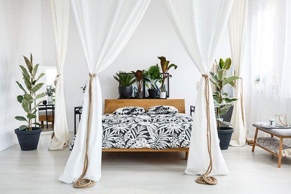 cây trồng trong phong ngủ