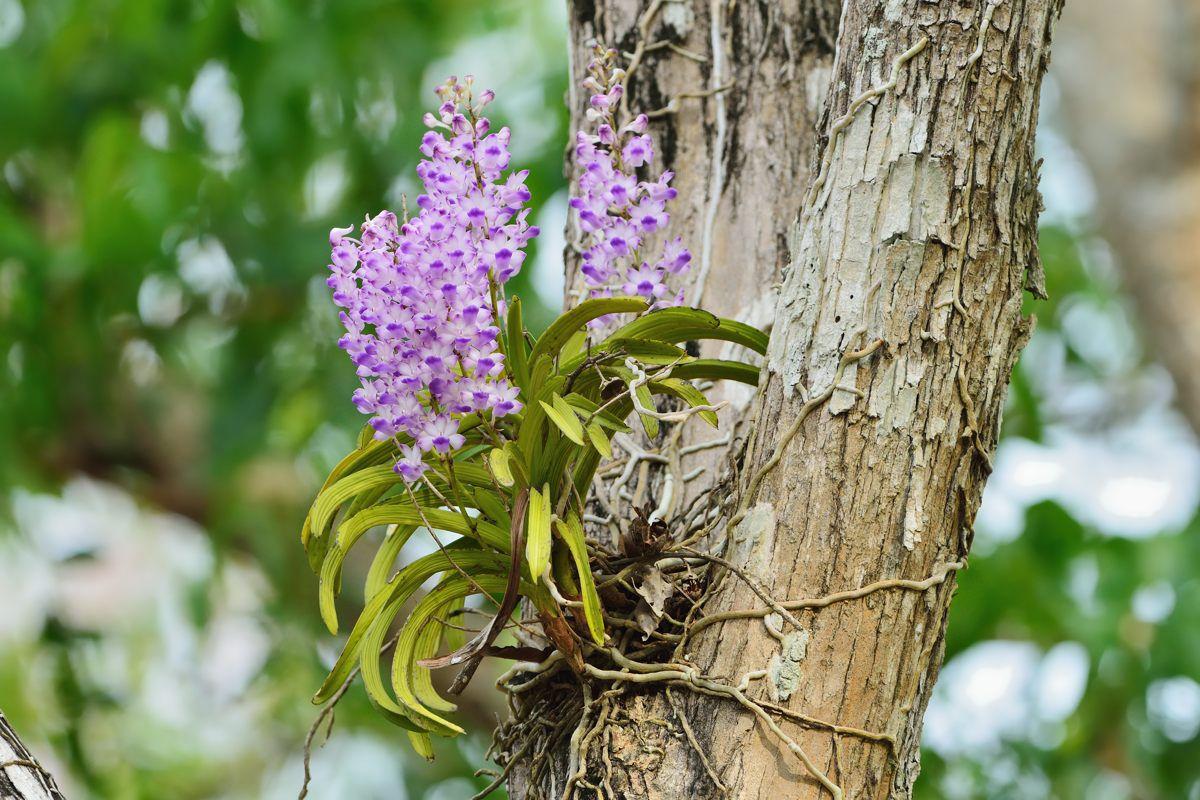Hoa Lan Ngọc Điểm Hải Âu - N Flower